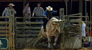 Westgate River Ranch Resort Saturday Night Rodeo